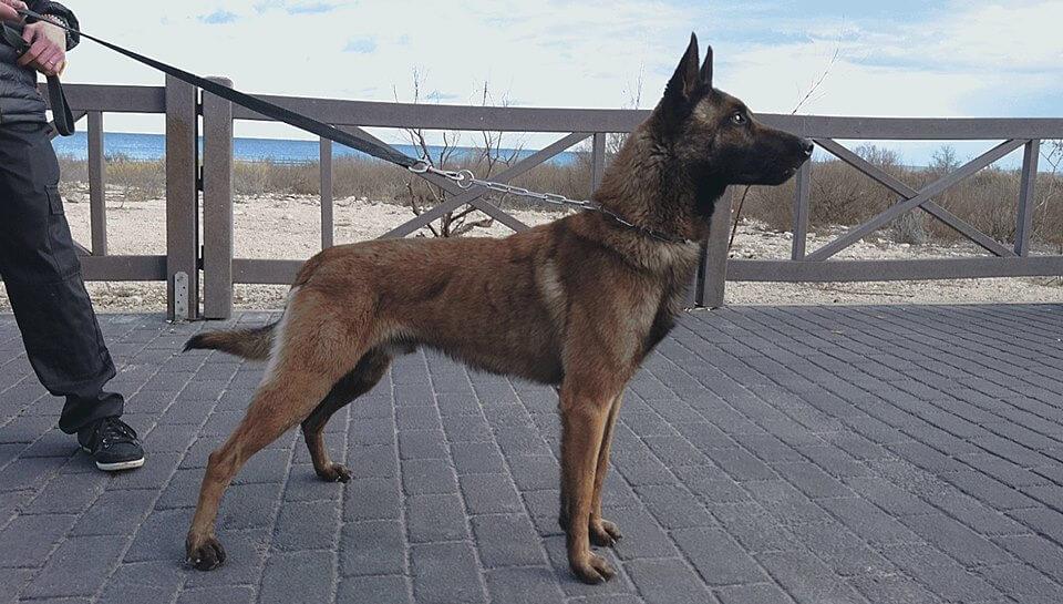 perros-que-saben-detectar-el-cancer-de-senos-2