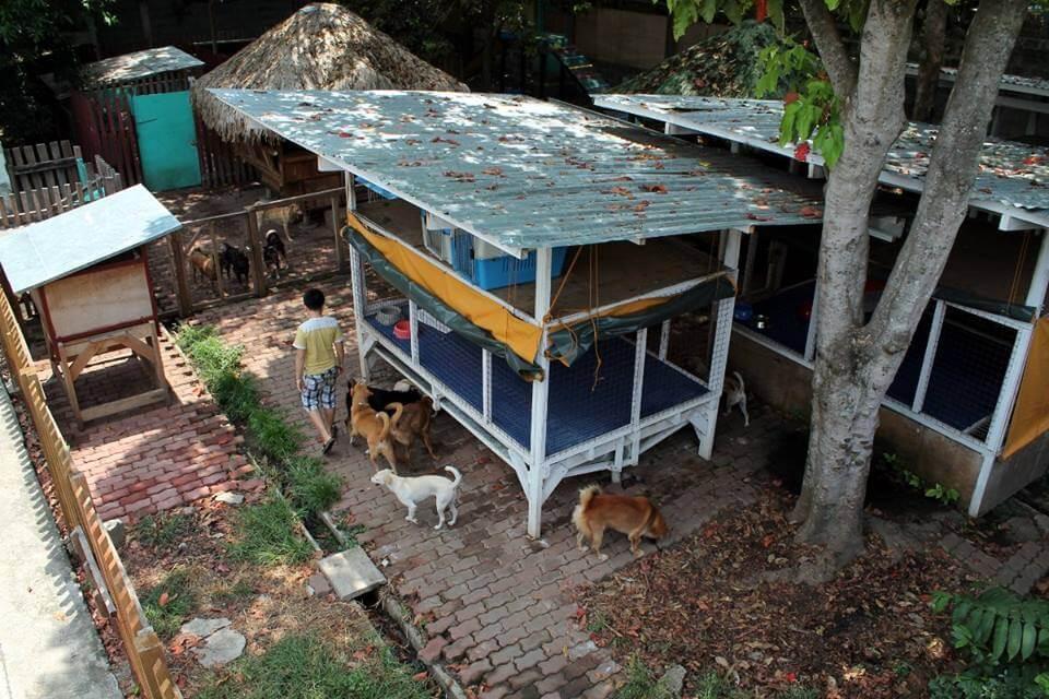 refugio-de-animales-2