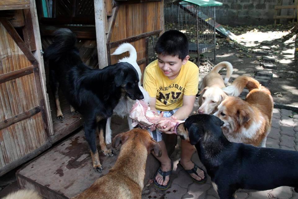 refugio-de-animales-3