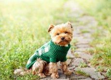 ropa-para-mascotas