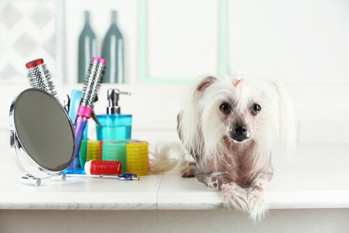¿Por qué es peligroso teñir el pelo de tu mascota?