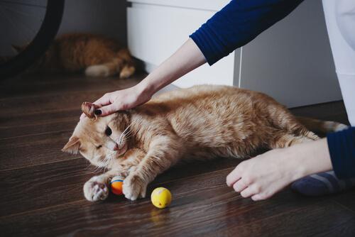 ¿Quieres ayudar a las personas trabajando con mascotas?