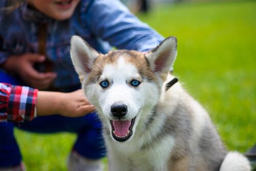 ¿Tu perro no confía en ti? ¡Sigue estos consejos!
