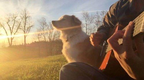 Maple, la perra músico que conmovió las redes sociales