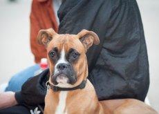 terapia-neural-para-perros