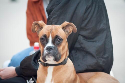 Terapia neural para perros