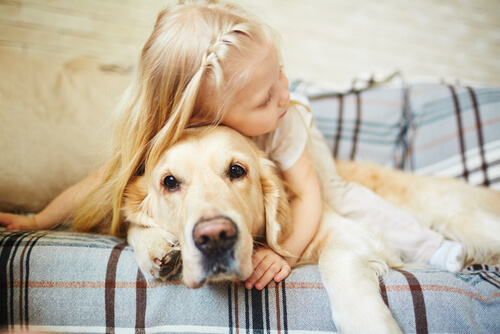 Young girl hugging a Golden Retriever on the couch