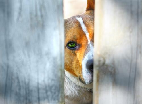 Los avances de la justicia colombiana con los animales
