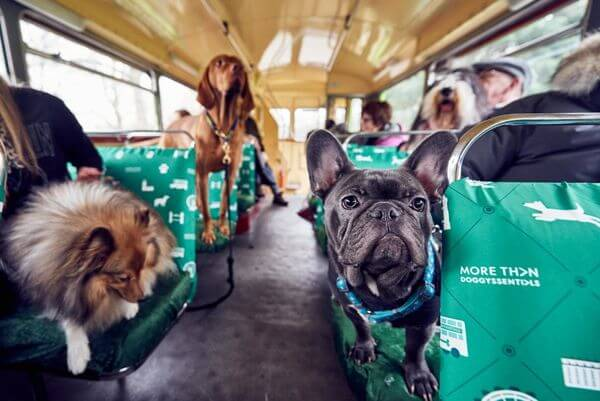 autobus-para-perros-2