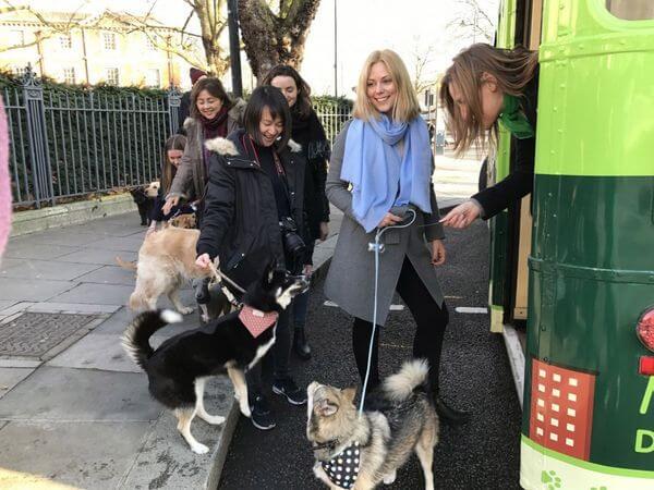 autobus-para-perros-3