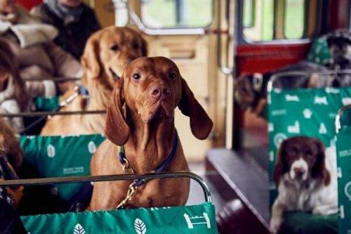 Londres estrena un autobús para perros