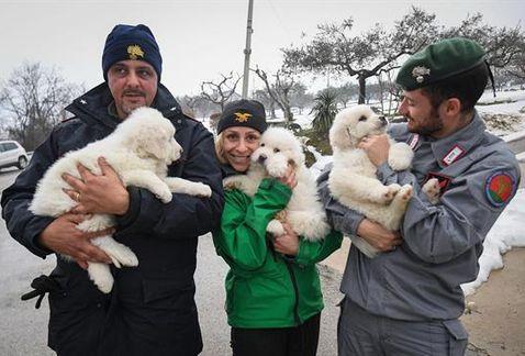 Tres cachorros han sobrevivido en el hotel sepultado en Italia