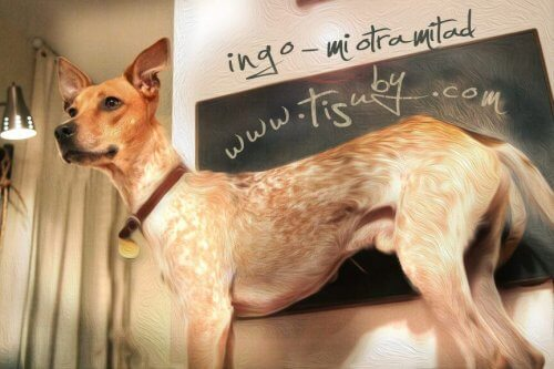 Una cantante venezolana crea una canción hermosa para los perros