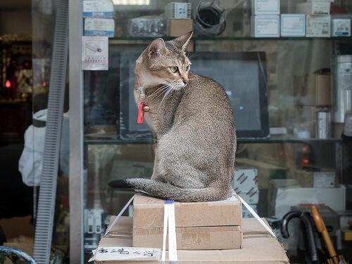 Hong Kong, la ciudad enamorada de los gatos