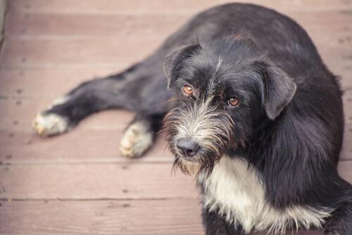 Croquetas anticonceptivas para perros callejeros