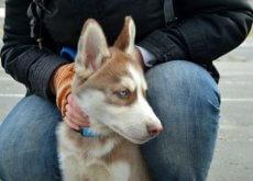 comprar-o-adoptar-un-perro