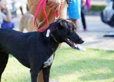 cromoterapia-en-los-perros