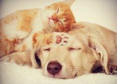 enfermedades-de-perros-y-gatos