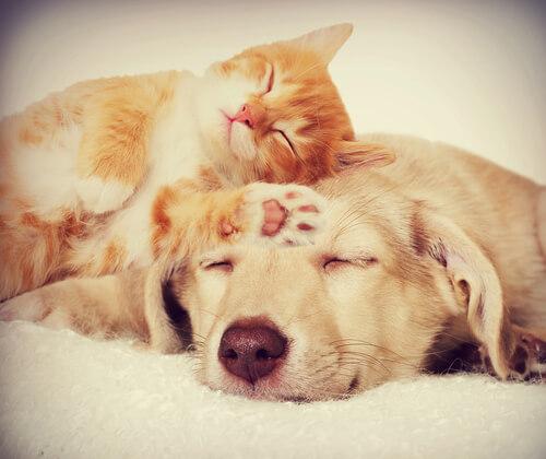 3 enfermedades que comparten perros y gatos