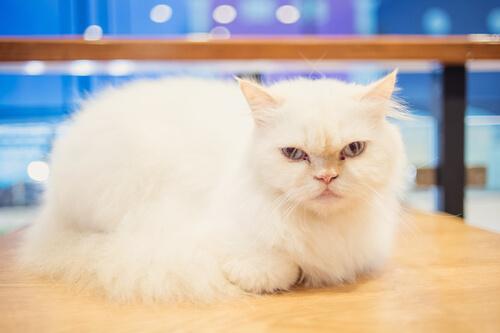 ¿Se puede entrenar a un gato?