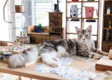 libros-sobre-gatos