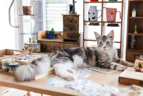 Un gato en un escritorio.