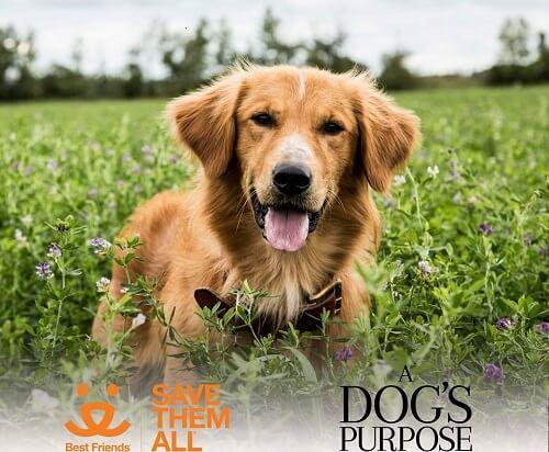 No al estreno de 'A dog´ s purpose' por maltratar animales