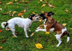 pelea-entre-perros