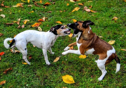 ¿Cómo puedes detener una pelea entre perros?