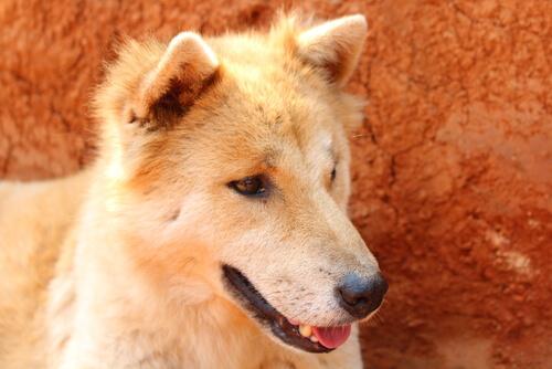 ¿Problemas estomacales en tu perro? ¡Ayúdalo!