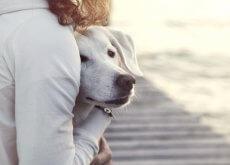 perro-miedo-a-las-visitas