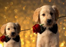 perro-para-san-valentin