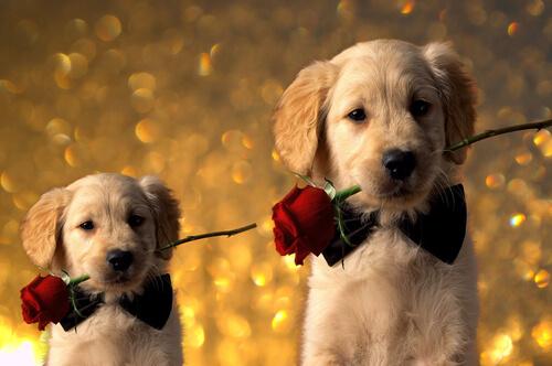 ¿Tu pareja ama los perros? Regálale uno de estos 5 libros por San Valentín