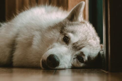 ¿Y si mi perro no duerme por las noches?