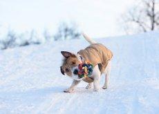 perro-sacude-sus-juguetes