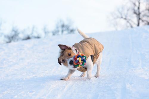 Perro sacude sus juguetes