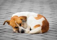 perros-callejeros
