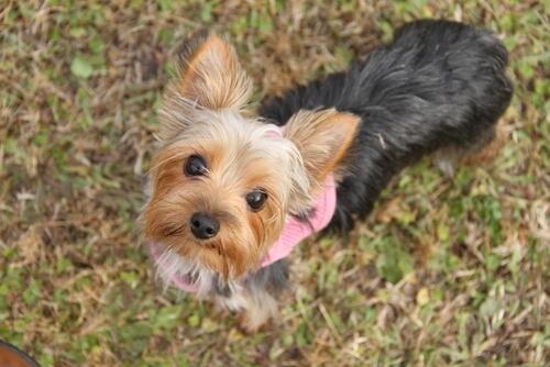 Perros pequeños: 6 cosas que debes saber