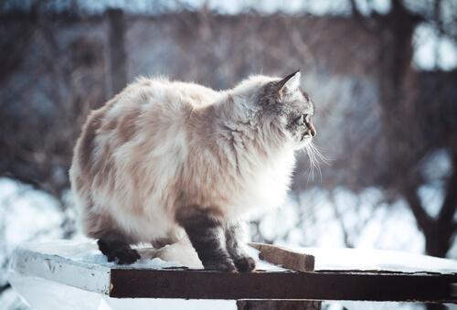 Fotos de perros y gatos que adoran invierno