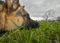 plantas-toxicas-para-los-perros