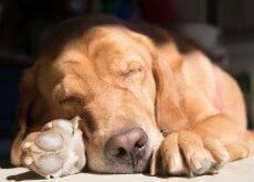 posturas-de-perro-durmiendo