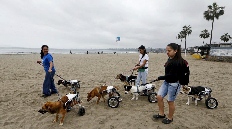 refugio para perros discapacitados 2