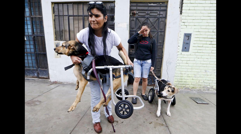 refugio para perros discapacitados