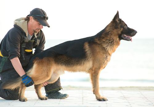 Terapia con perros abandonados para presos