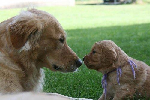 Avidog, una nueva red que ayuda a perros, jóvenes y abuelos