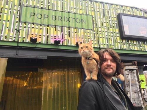 Bob, un gato callejero
