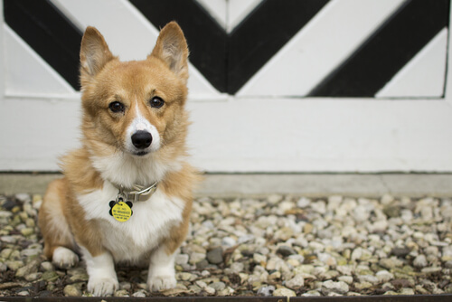 ¿Es posible cambiarle el nombre a mi perro?