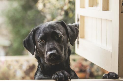 ajo antiparasitario perros