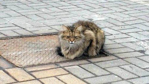 Un gatito abandonado lleva un año esperando a sus dueños