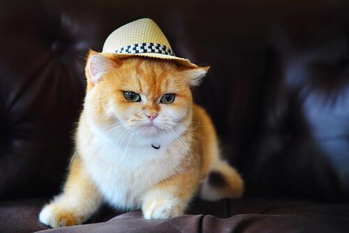 10 gatos más famosos de la televisión y el cine